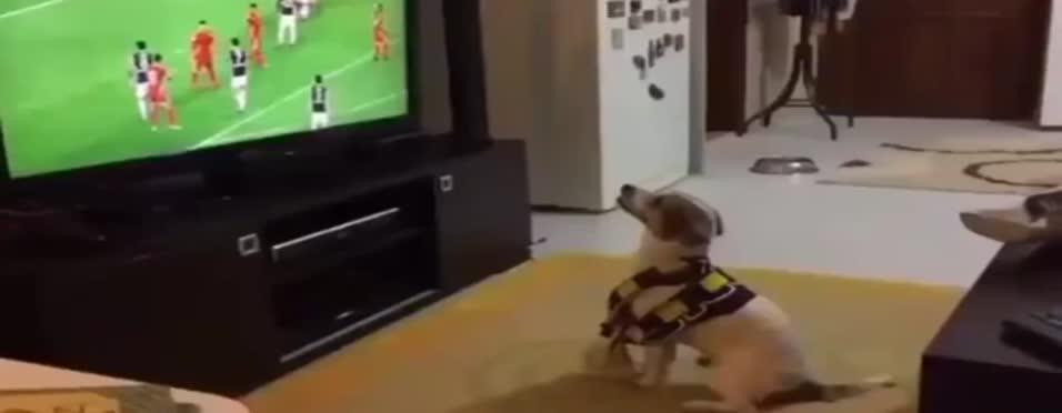 Kjaer'in golüyle co�an sevimli köpek