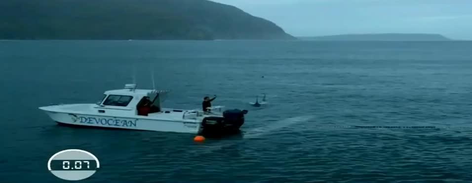 Phelps, köpek balığıyla yarıştı!